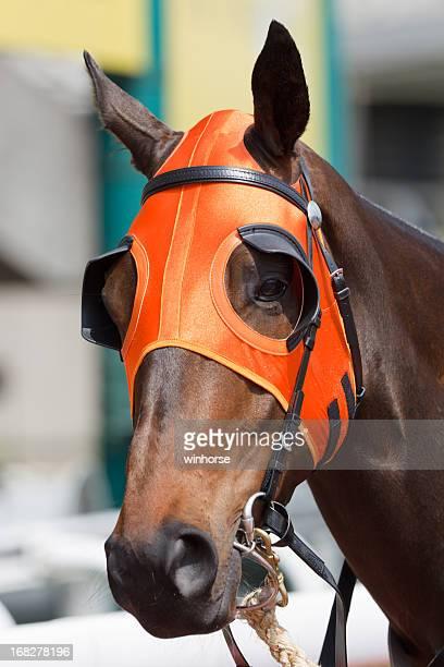 Cabeza de caballo con naranja anteojeras