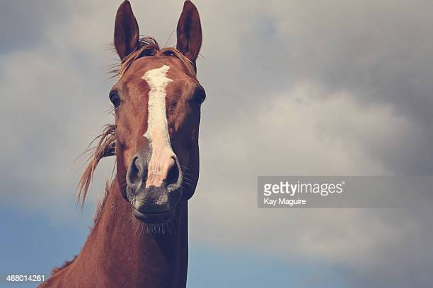 Horse Head with sky background