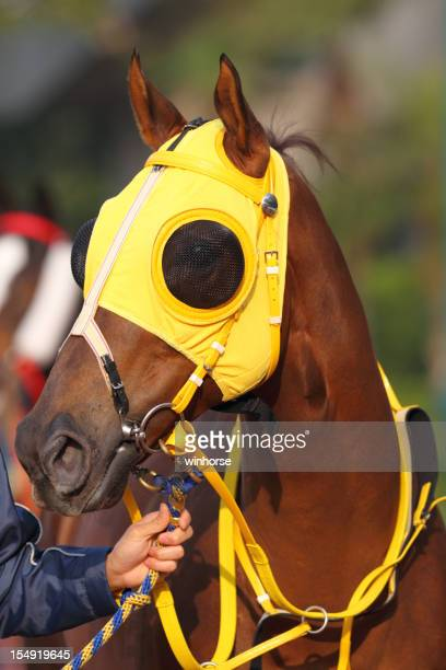Horse head with Yellow Blinders