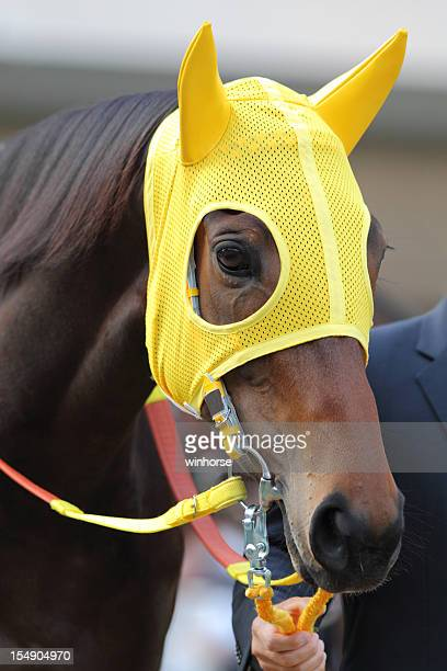 Horse head with Yellow Ear Plugs