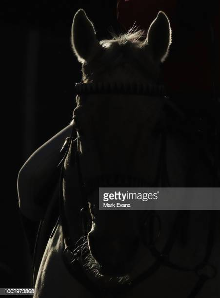A horse heads down the tunnel for race 8 during Sydney Racing at Royal Randwick Racecourse on July 21 2018 in Sydney Australia