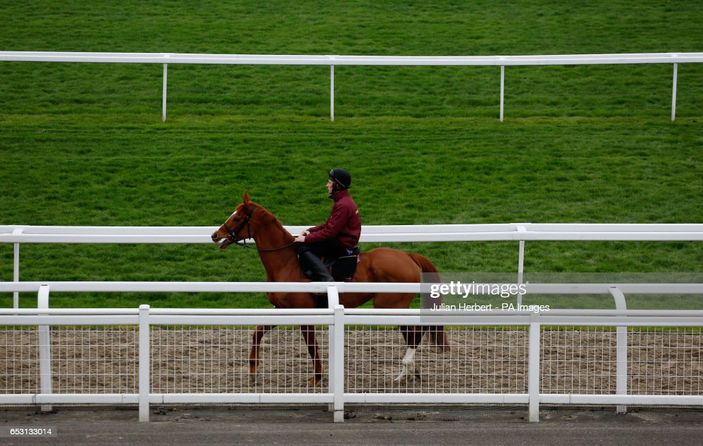 A horse heads out for an early morning exercise session during Champion Day of the 2017 Cheltenham Festival at Cheltenham Racecourse.