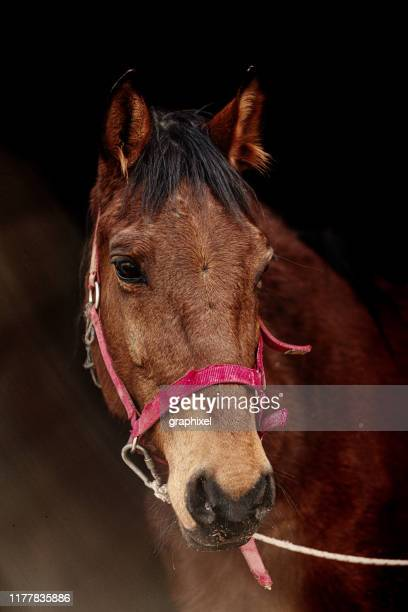horse headshot - pony stock pictures, royalty-free photos & images