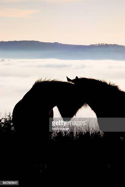 cheval cœur - accouplement cheval photos et images de collection