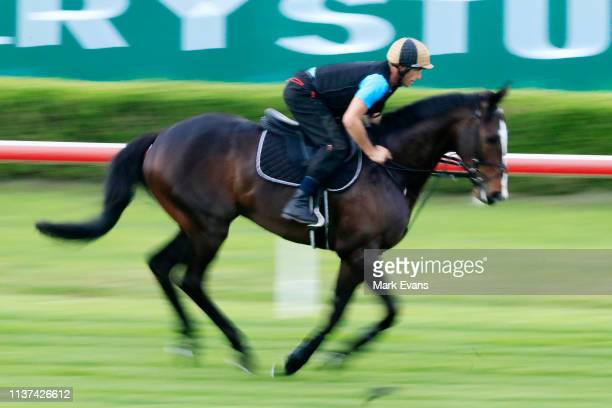 UK horse He's Eminent has a gallop at Canterbury Park during trackwork on March 22 2019 in Sydney Australia He's Eminent is entered in the Ranvet...