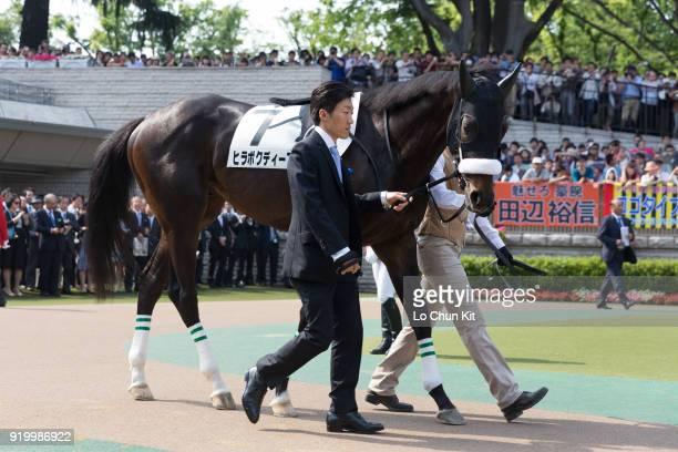 Horse Hiraboku Deep being led around the paddock during Tokyo Yushun at Tokyo Racecourse on May 26 2013 in Tokyo Japan Tokyo Yushun Japanese Derby is...