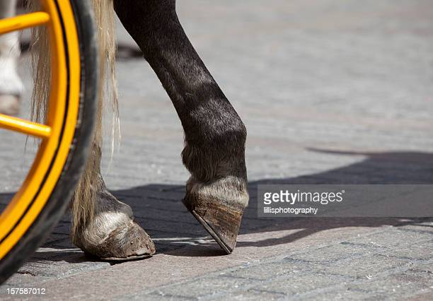 Horse Hooves Detail