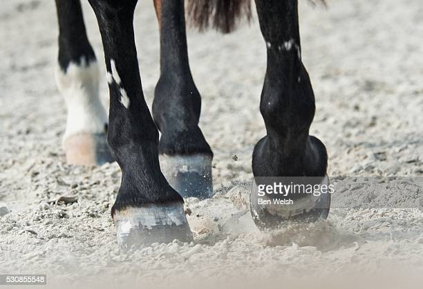 Horse hooves running on the ground, benalamadena costa, malaga, costa del sol, andalusia, spain