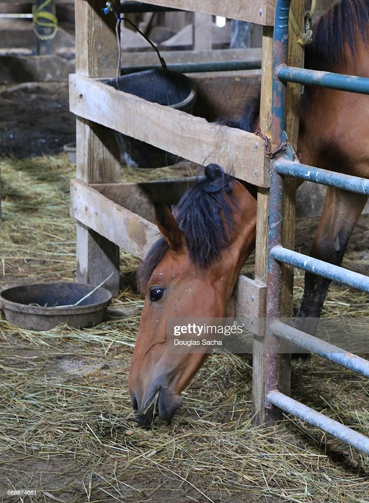 Horse in a barn stall : Stock Photo