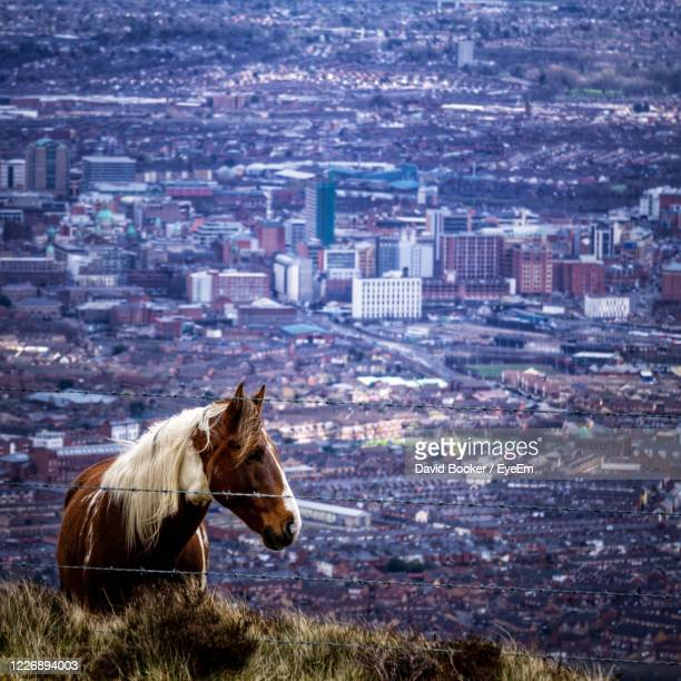 horse in a city - belfast stock pictures, royalty-free photos & images