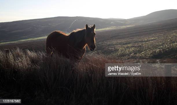 horse in a field - ulster province stock pictures, royalty-free photos & images