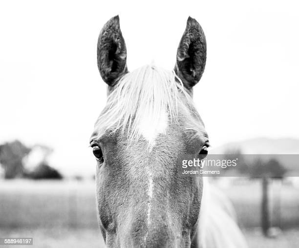 a horse in a field. - bozeman stock pictures, royalty-free photos & images
