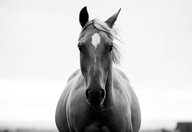 A Horse In A Field. Wall Art
