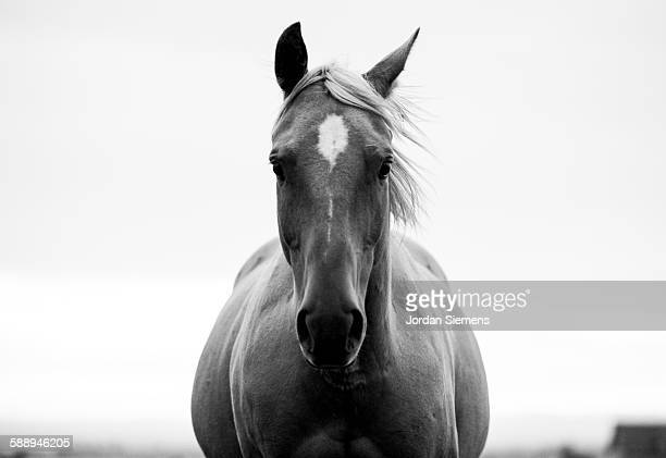 a horse in a field. - horse stock pictures, royalty-free photos & images