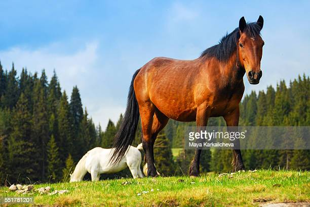 Horse in a mountain pasture