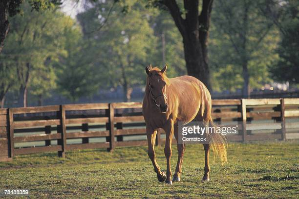 horse in a paddock - lexington kentucky stock pictures, royalty-free photos & images