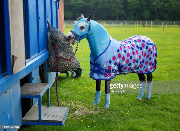 A horse in a spotted blanket eats straw during the Duncombe Park Country Fair on May 28 2018 in Helmsley England Set in the grounds of one of...