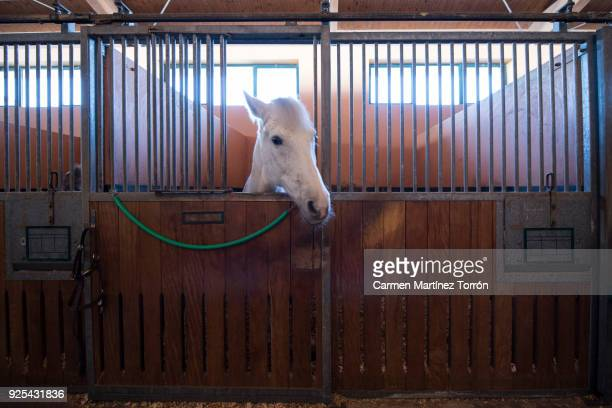horse in a stable - recreational horseback riding stock pictures, royalty-free photos & images