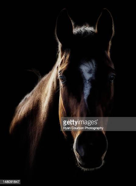 Horse in backlight