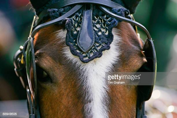 Horse in ceremonial tack harnessed to driving carriage Windsor England