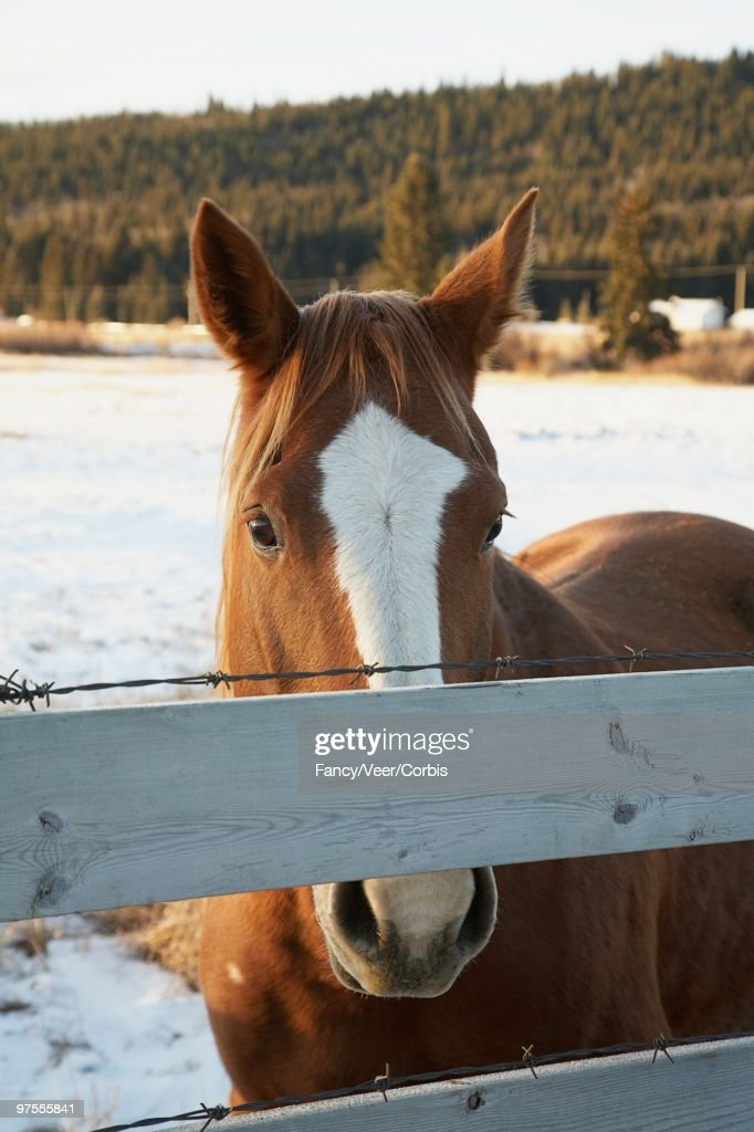 Horse in Coral : Stock Photo