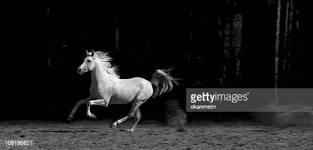 horse in corral, black and white - thoroughbred horse stock photos and pictures