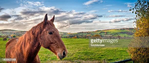 馬のフィールド、HDR 、Cotswolds 、グロスタシャー