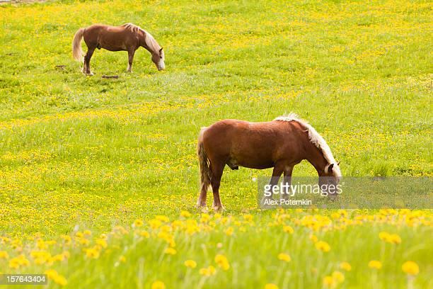 Horse in meadow