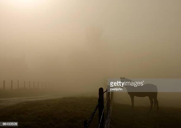 Horse in mist