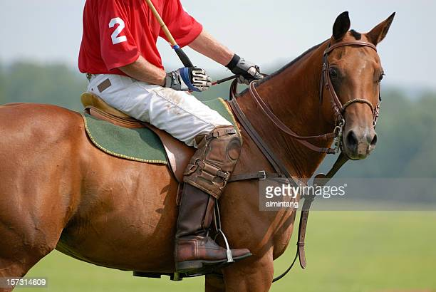 Horse in Polo Game