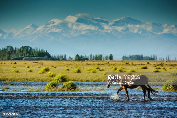 Horse In River Against Sky
