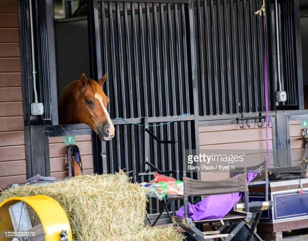 horse in stable - barry wood stock pictures, royalty-free photos & images