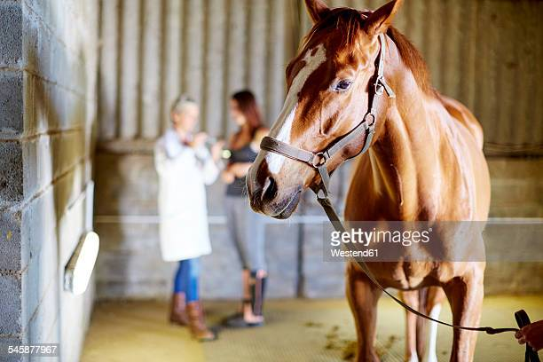 Horse in stable with teenage girl and veterinarian in background