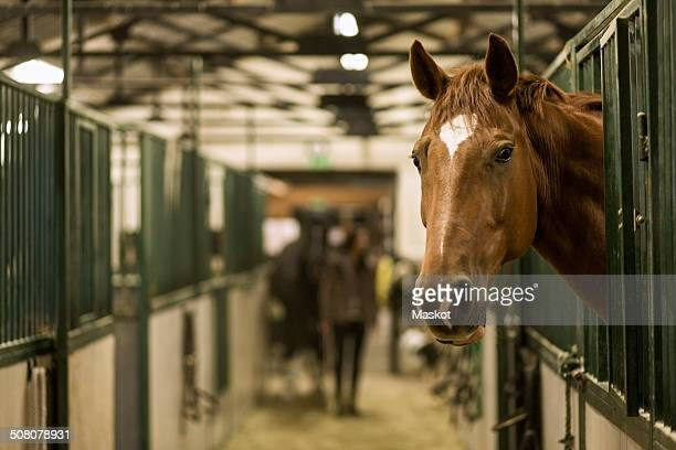 Horse in stall at stable