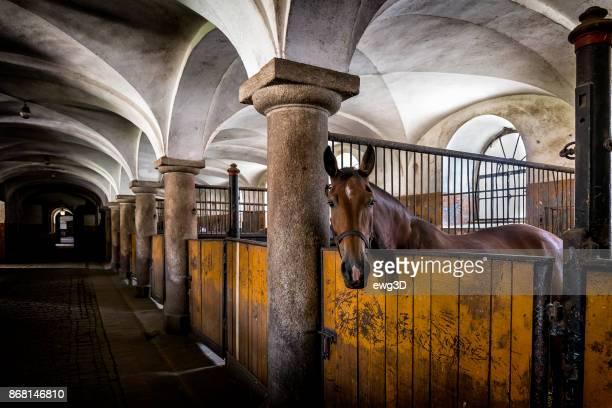 Pferd im Feld stabil auf dem Bauernhof