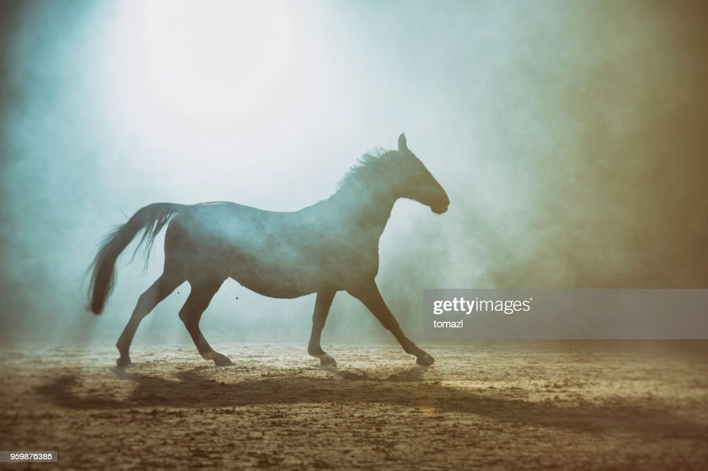 Horse in the fog : Stock-Foto