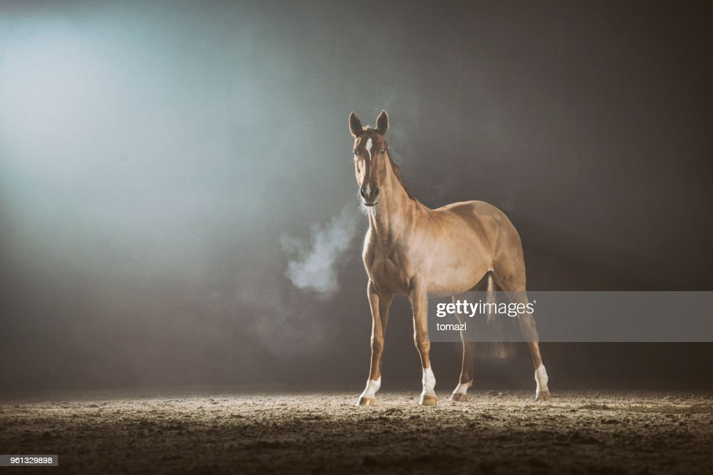 Horse in the fog : Stock Photo