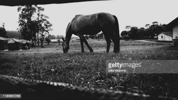 horse in the nature - marrom stock pictures, royalty-free photos & images