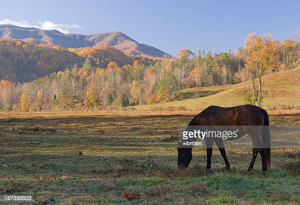 Horse in the Smoky Mountains