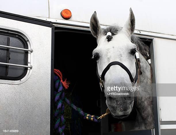 Pferd in Trailer