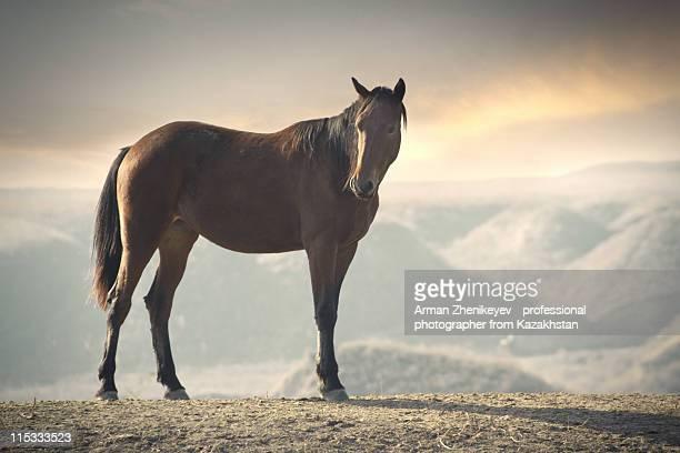 Horse in wild