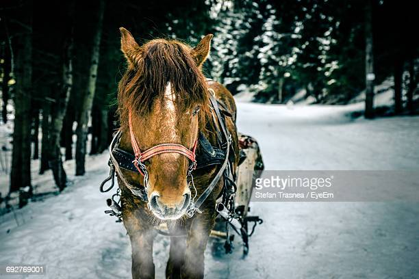 horse in winter - christmas horse stock pictures, royalty-free photos & images