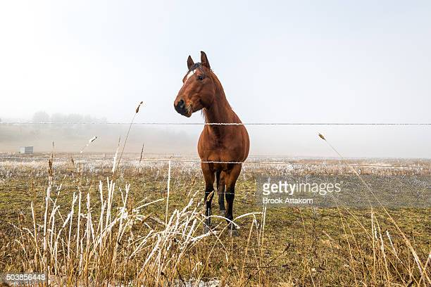 Horse in winter season