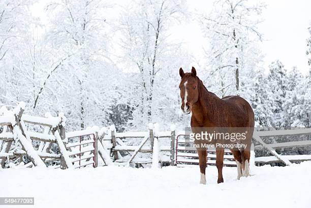 Horse in winter wonderland