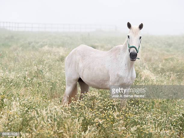 Horse inside a large fenced.