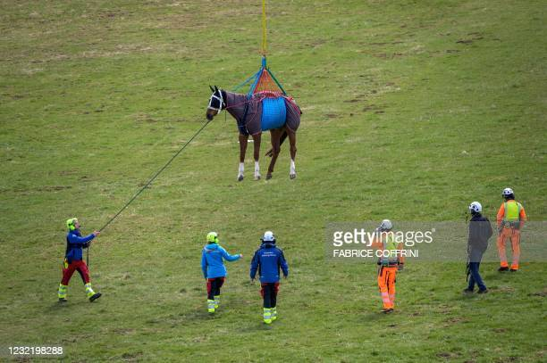 Horse is about to touch ground after being airlifted during a test by Swiss army forces on hoisting horses with a helicopter in Saignelegier on April...