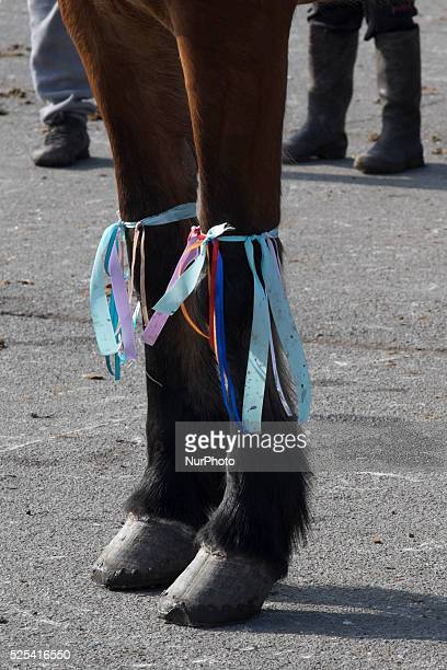 A horse is decorated with ribbons as Bulgarian Roma celebrate Horse Easter in the Fakulteta neighborhood of Sofia on February 28 2015 Every year on...