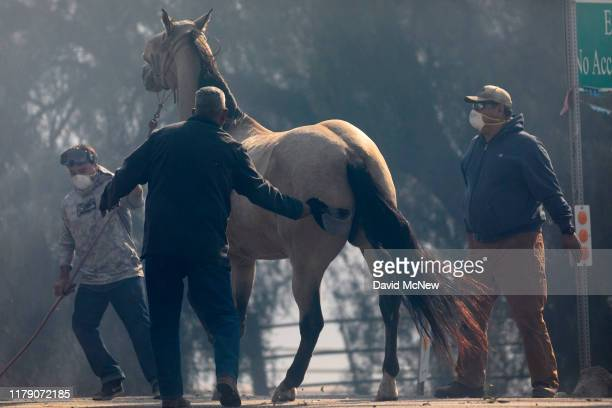 A horse is evacuated from the Easy Fire on October 30 2019 near Simi Valley California The National Weather Service issued a rare extreme red flag...