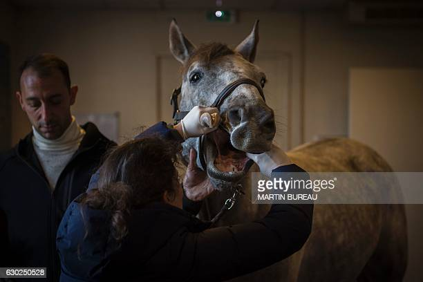 A horse is examined at the veterinary clinic of the equestrian training center of Grosbois in MarollesenBrie on November 18 2016 / AFP / MARTIN BUREAU