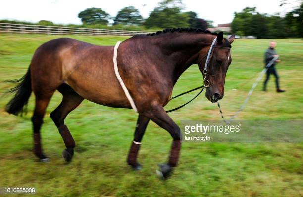 A horse is exercised after arriving at 152nd the Ryedale Country Show on July 31 2018 in Kirbymoorside England Held in Welburn Park near...